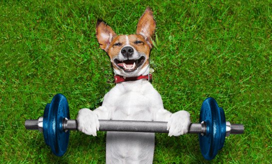 dog lying in the grass lifting a barbell